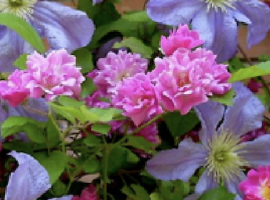 Trends & Products 2019