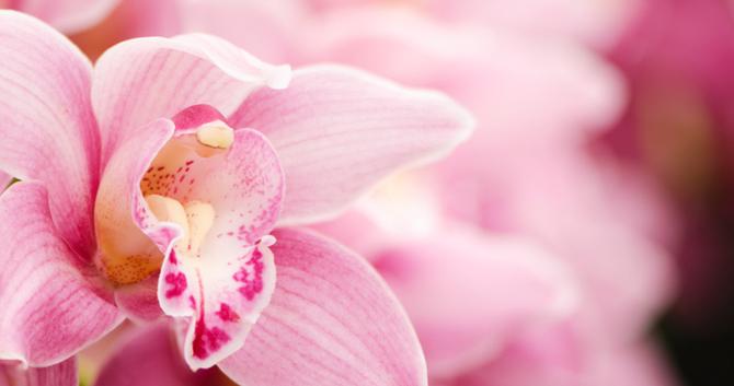 bloomiq, Beautiful flower
