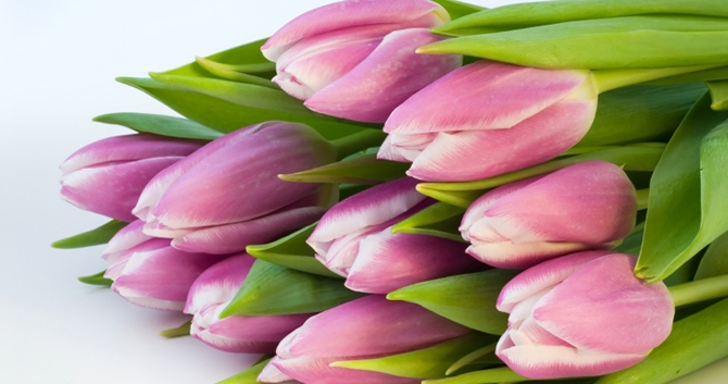 how to replant cut tulips